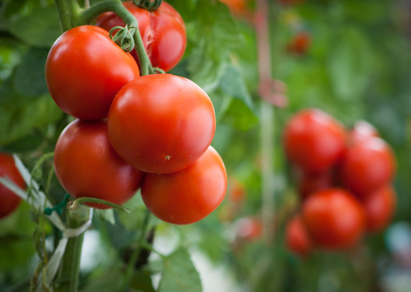 Rentnerin vergräbt tote Freundin im Tomatenbeet und kassiert für sie Rente